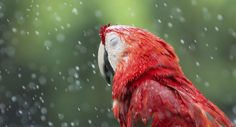 birds-rains