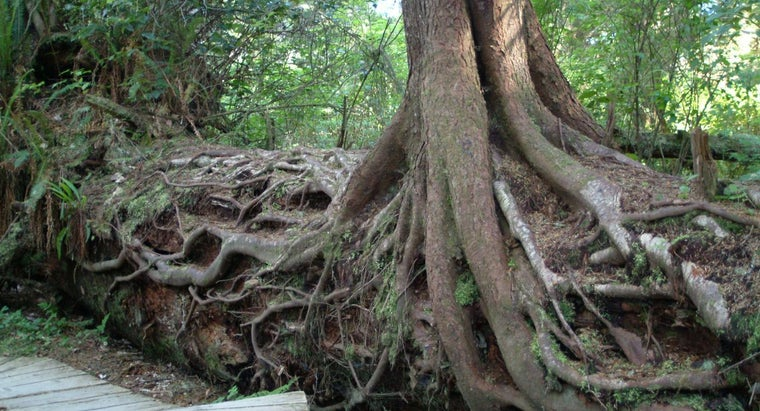 storms-make-trees-deeper-roots