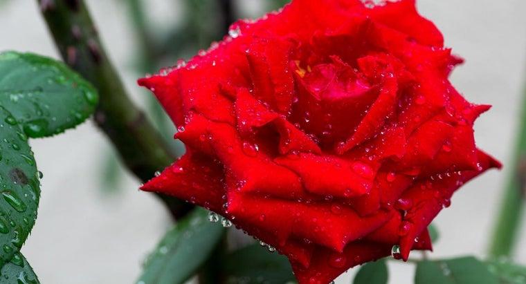 substitute-rose-water