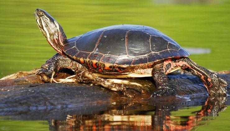sun-turtles-eat