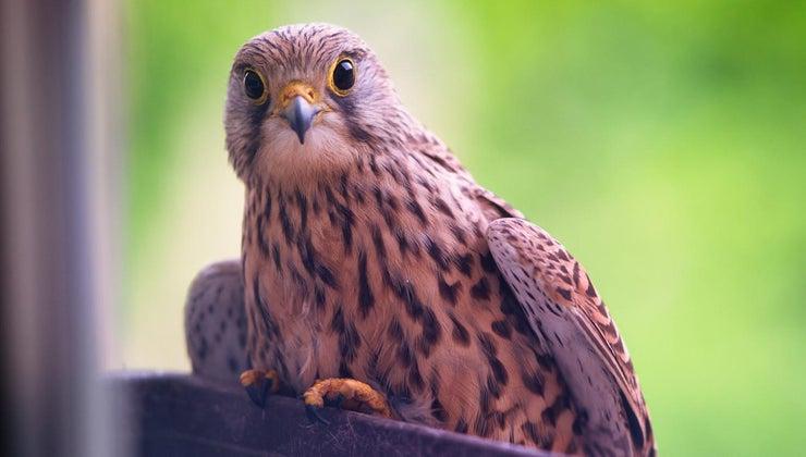 superstition-involving-bird-hitting-window