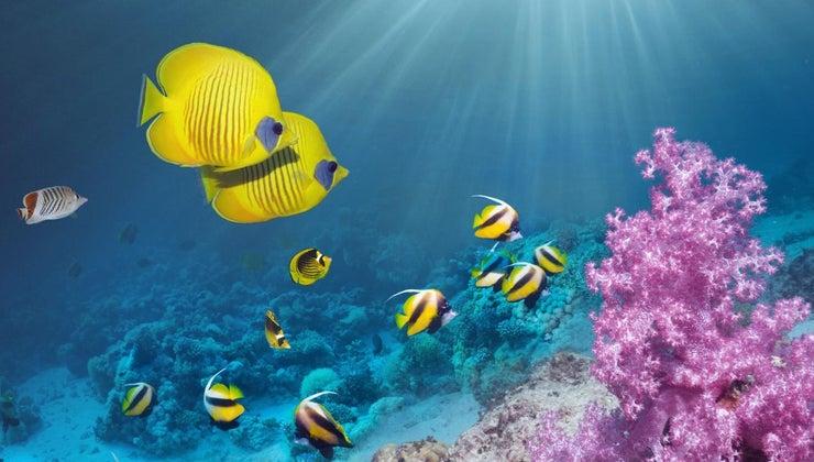 symbol-fish-represent