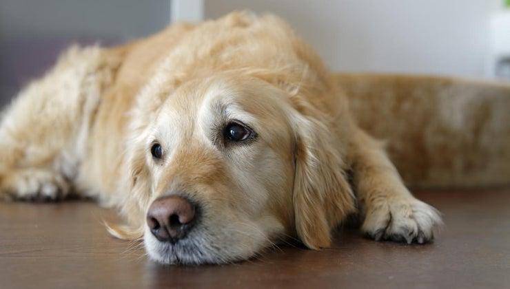symptoms-dog-dying