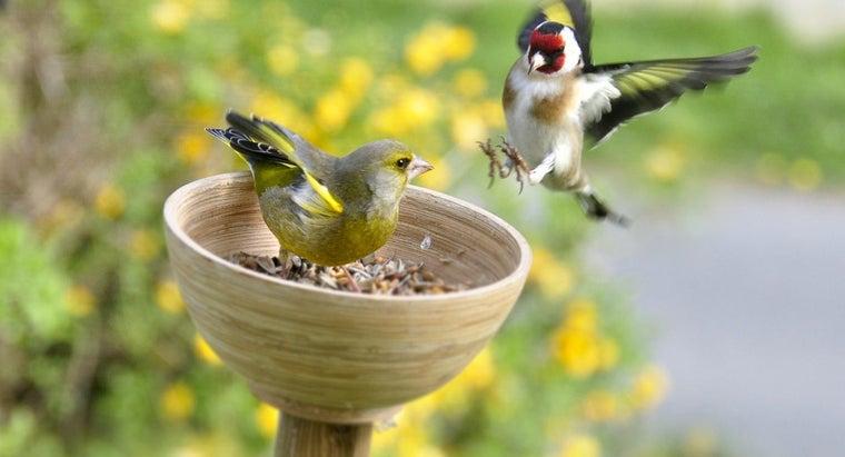 tell-female-finch-male-finch