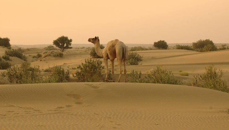 thar-desert-located