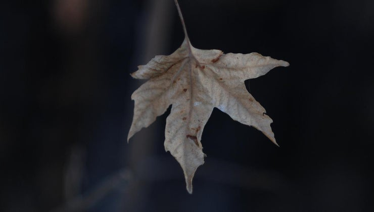 theme-story-last-leaf