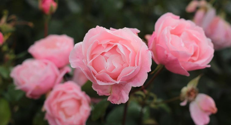 time-plant-roses