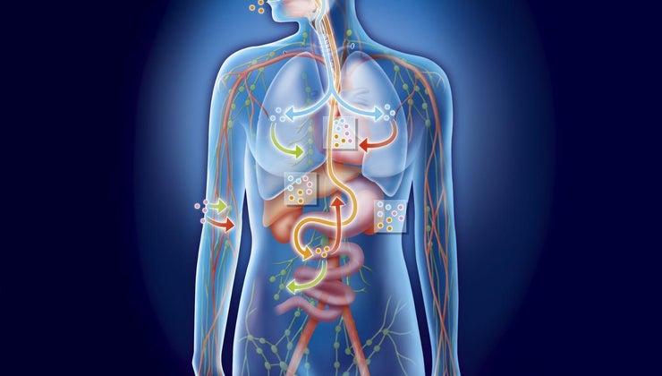torso-located-body