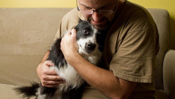 traits-border-collie-terrier-mix