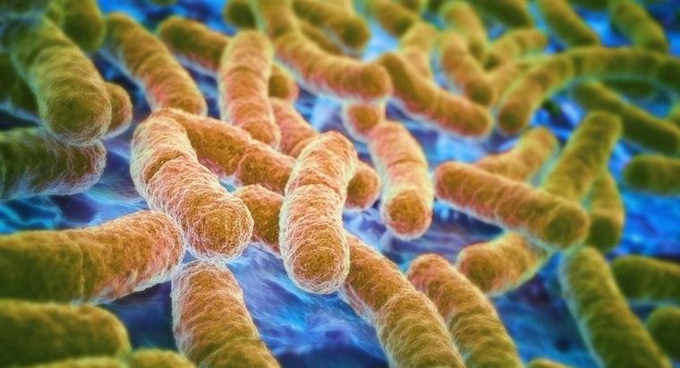 treat-e-coli-urinary-tract-infection