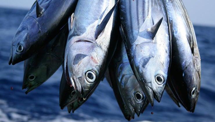 tuna-fish-eat