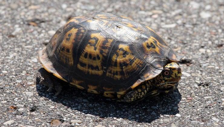 turtles-adapt-environment