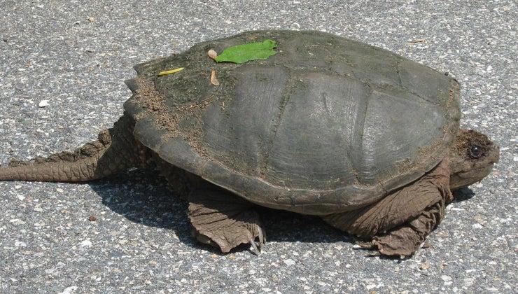turtles-tails