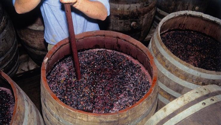two-main-types-fermentation