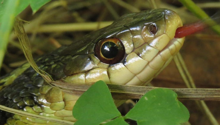 type-snake-black-yellow-stripes