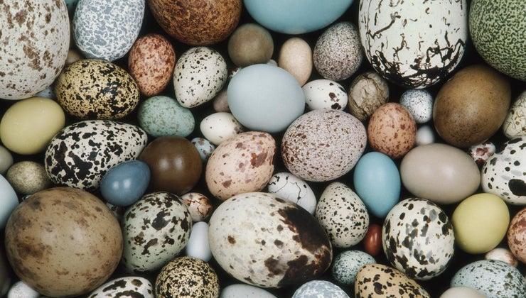 animals-lay-eggs
