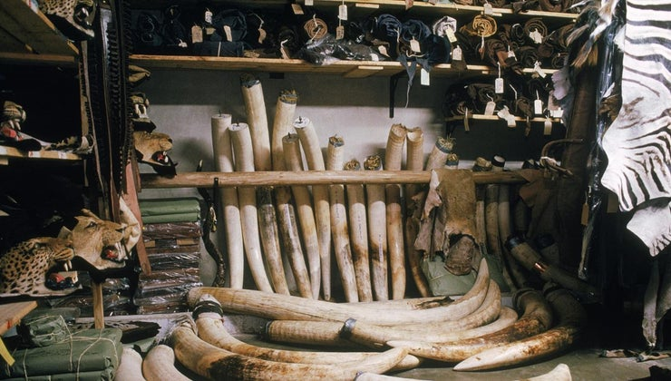 uses-elephant-ivory