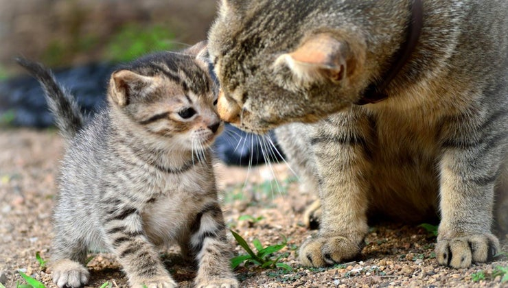 various-animals-care-young