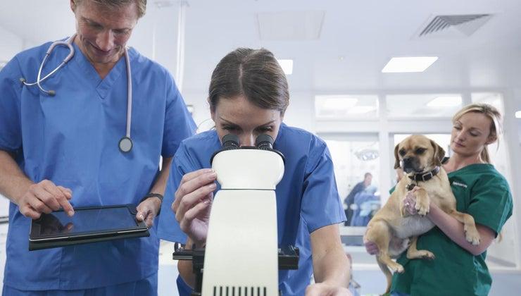 veterinarians-use-chemistry