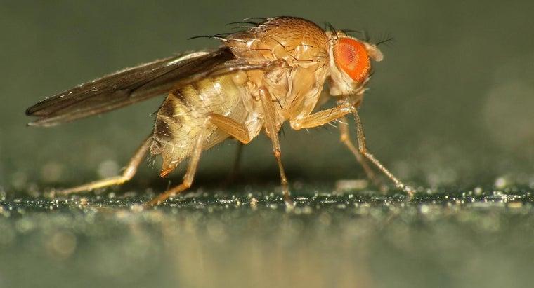 vinegar-keep-flies-away