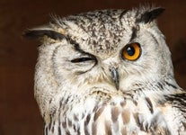 What Does It Mean When You See An Owl In Daytime? Owl Symbolism & Meanings