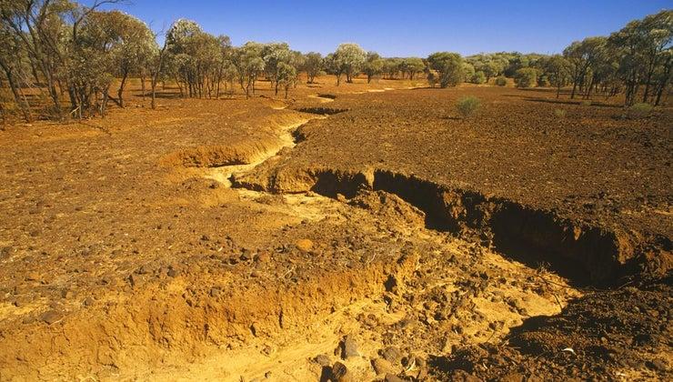 ways-stop-desertification