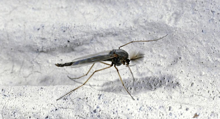 causes-gnats