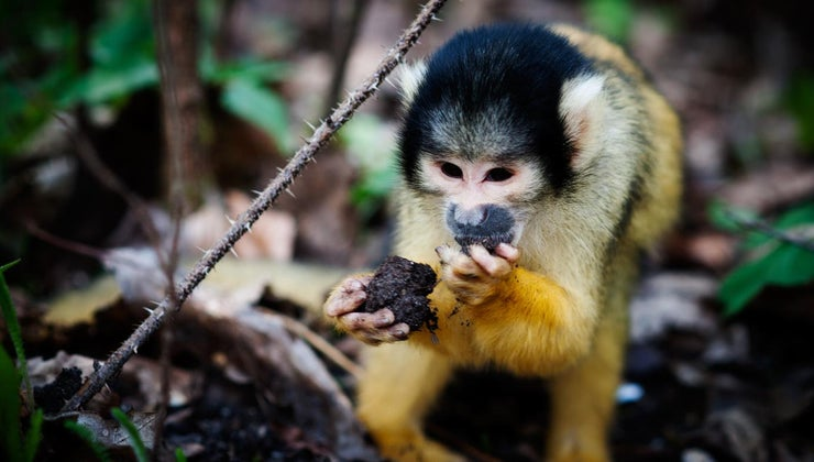 monkeys-eat