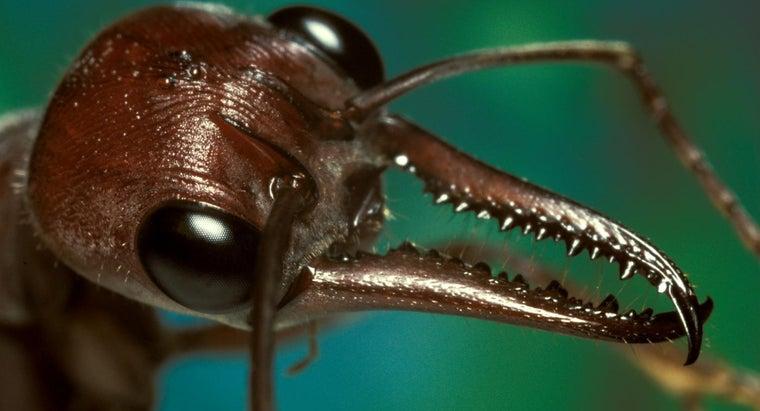ant-bite-look-like-treat