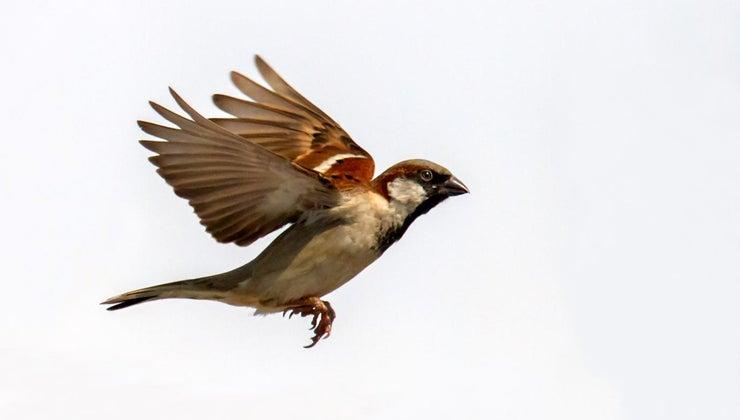 sparrow-symbolize
