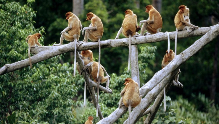 group-monkeys-called