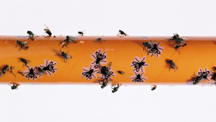 home-remedy-catching-house-flies
