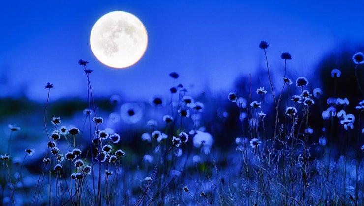 blue-corn-moon-movie-pocahontas