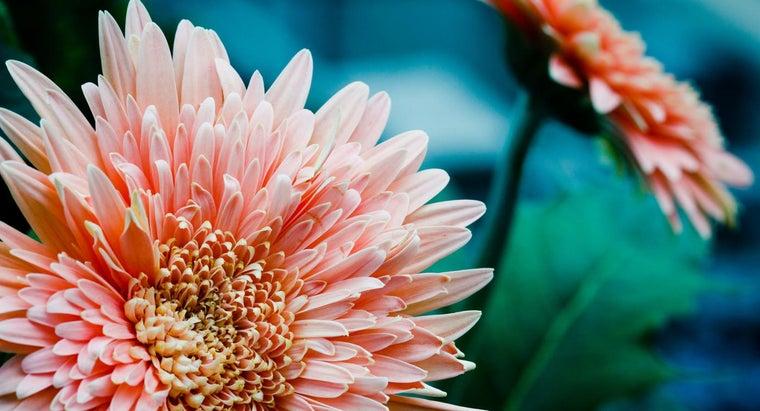 flower-35th-wedding-anniversary