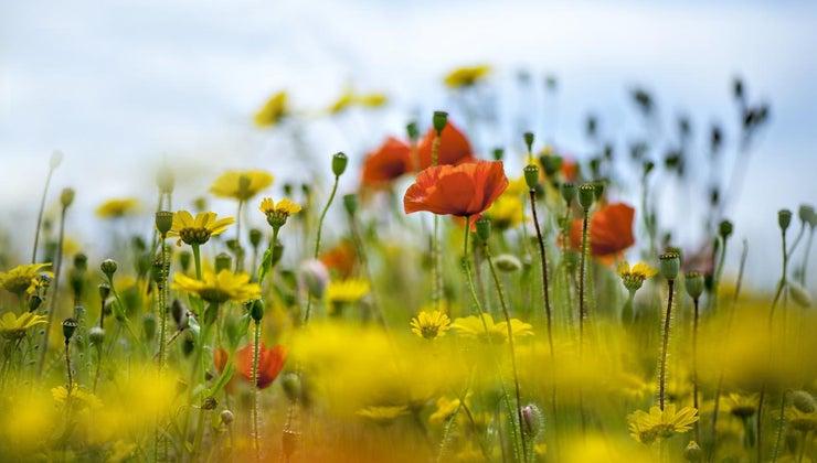 function-flower