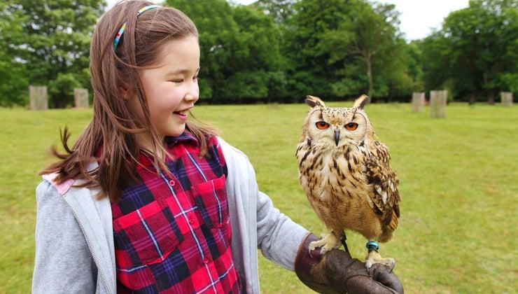 can-buy-owl