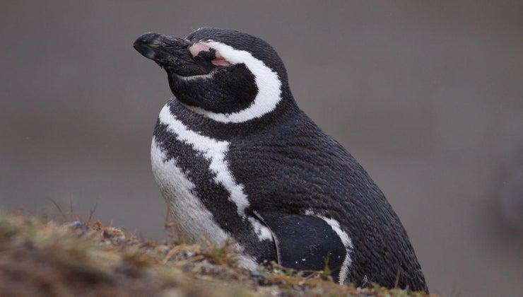 penguins-sleep