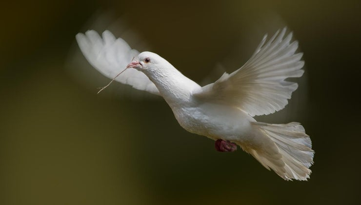 white-doves-symbolize