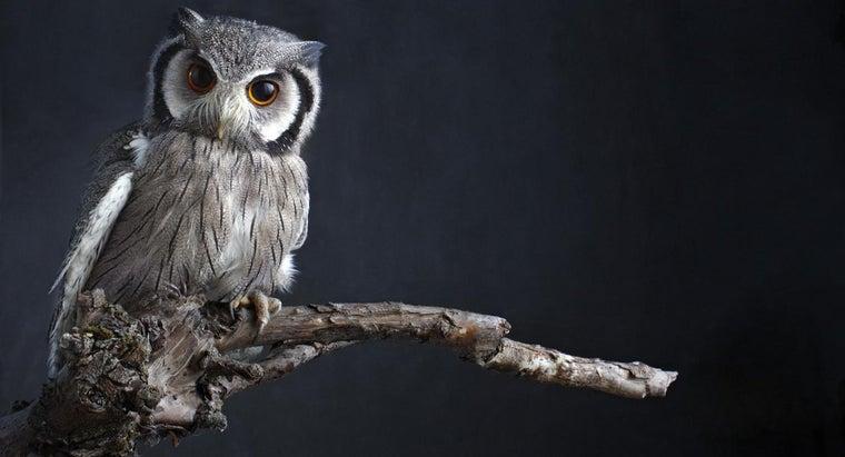 owl-bad-omen