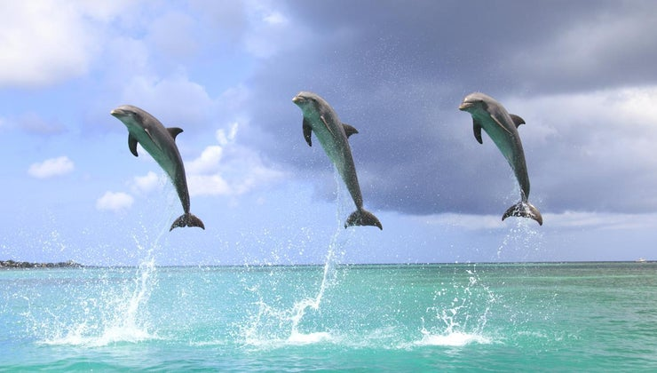 dolphins-jump-out-water
