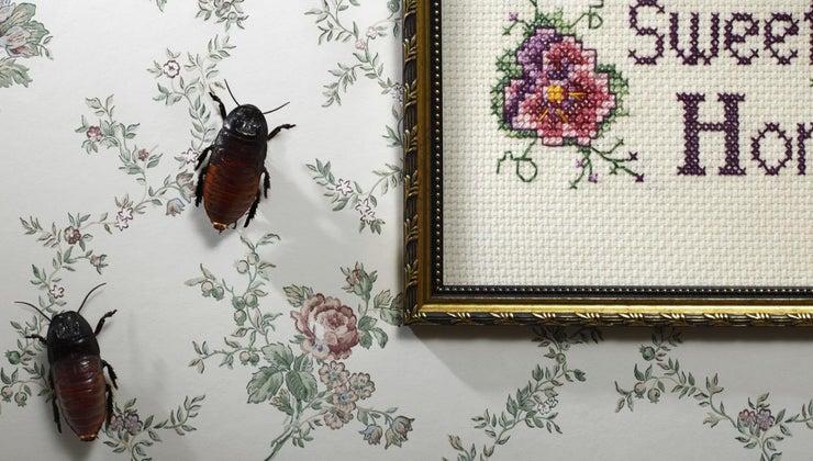 roaches-clean-house