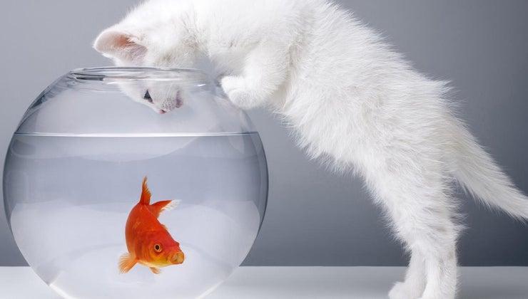 goldfish-swim-bottom-tank
