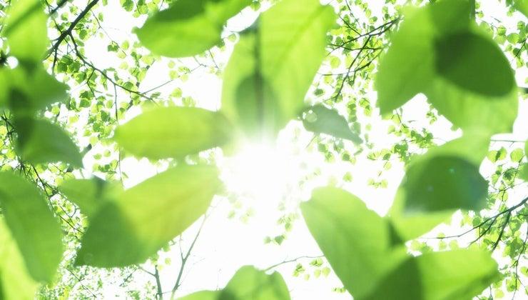 sun-important-earth