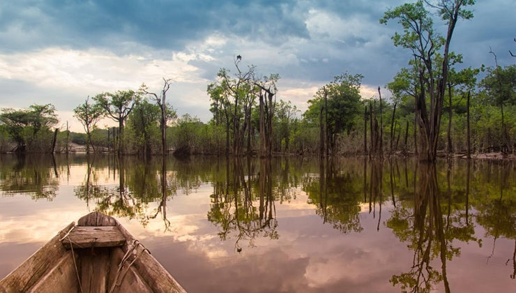should-save-amazon-rainforest