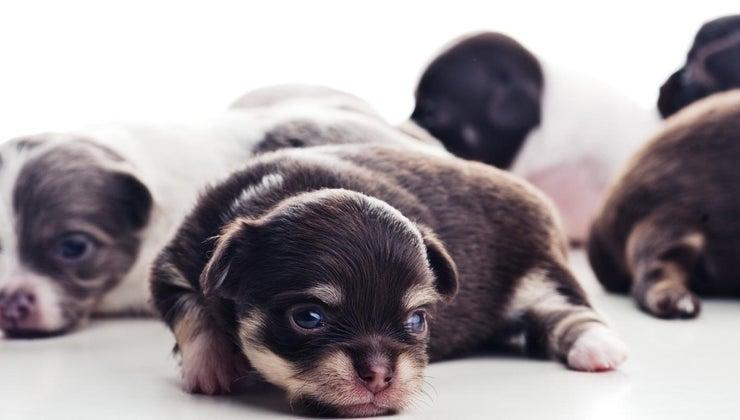 worm-newborn-puppies