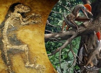 Monkeydactyl and the Little Foot Fossil: Major Evolutionary Breakthroughs of 2021 (So Far)