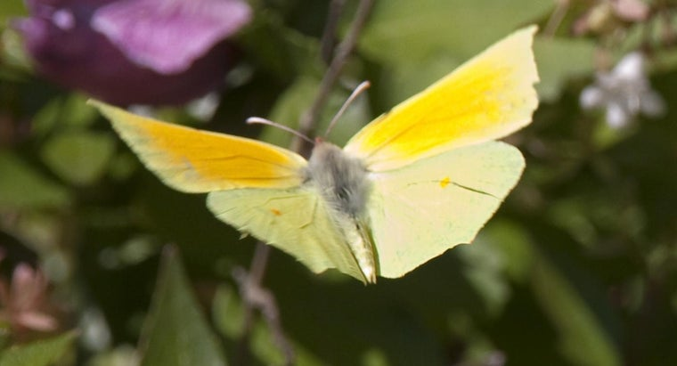 yellow-butterfly-symbolize