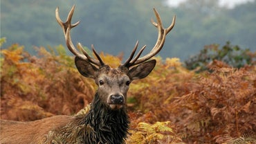 """What Does a """"12-Point Buck"""" Mean?"""