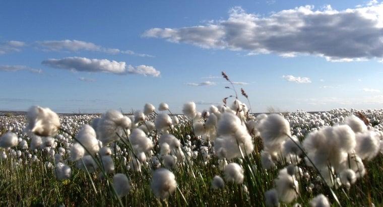 cotton-drill