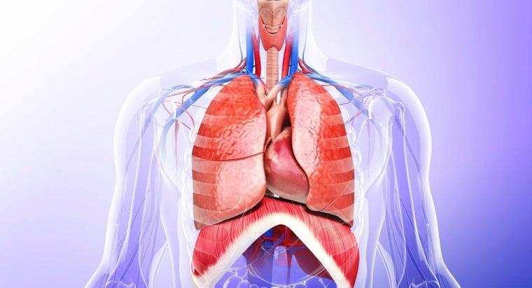 essential-organs-thoracic-cavity